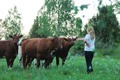 Talking with cows - 2